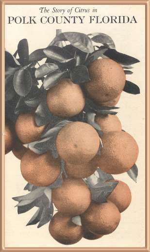 The Story of Citrus in Polk County Florida. A brochure prepared in 1933 for the Chambers of Commerce for several cities in Polk County.